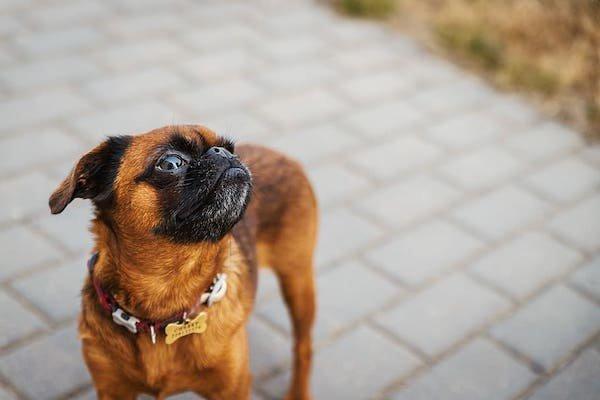 Embark Veterinary, Maker of Dog DNA Tests, Valued at $700 Million